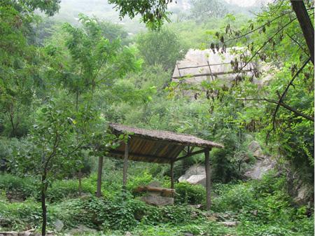 北京青菁顶自然风景区位于密云县石城镇黑龙潭向北约1公里,约2000亩