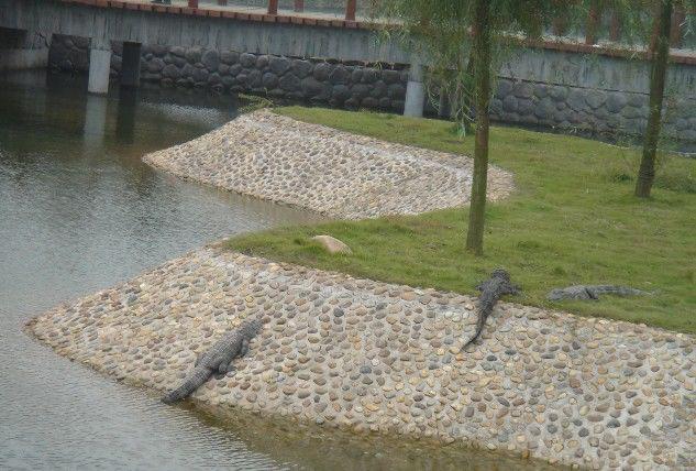 长沙动物园鳄鱼